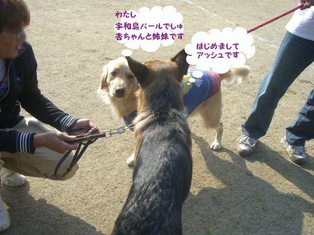 8_20101123121429.jpg