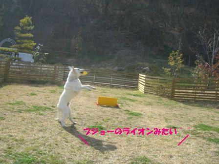 CIMG8132.jpg