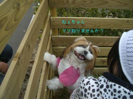 CIMG8302_20110313174507.jpg