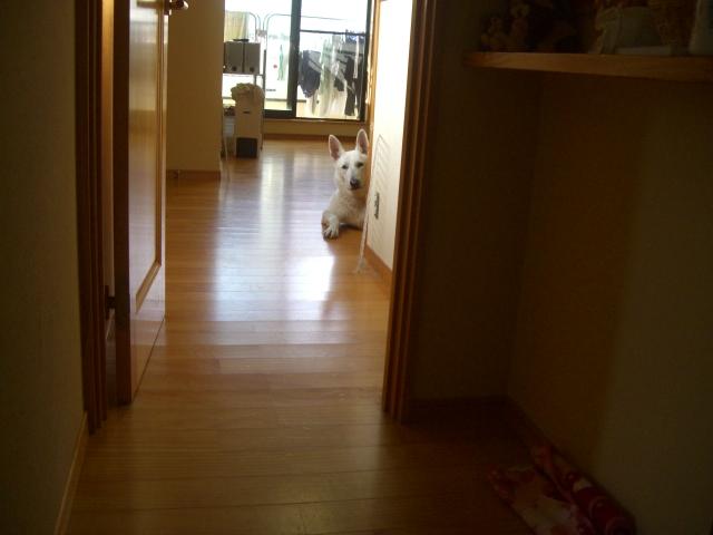 CIMG8384.jpg