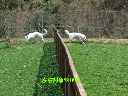 CIMG8468_20110329220915.jpg