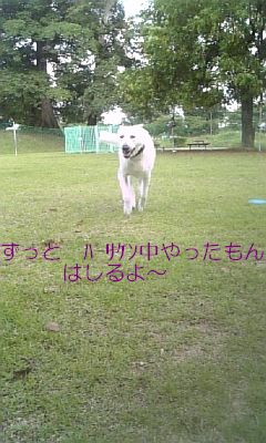 DVC00212.jpg