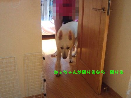 NEC_0772.jpg