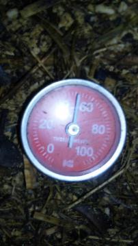 麹菌52度
