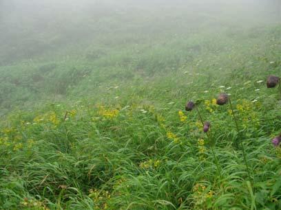 2010大雪山系平山-雨の登山-7