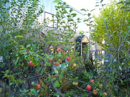 りんごの木ふたば公園から小島家方向@45