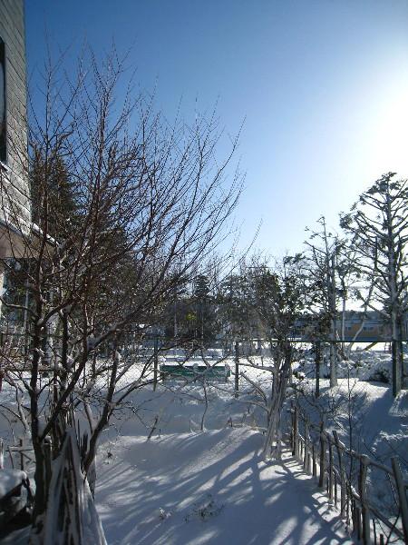 雪2012・11・28庭1@45