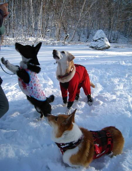 雪3ワン2012.11.28水源池15@45
