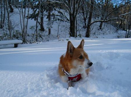 雪ケティ2012.11.28水源池5@45