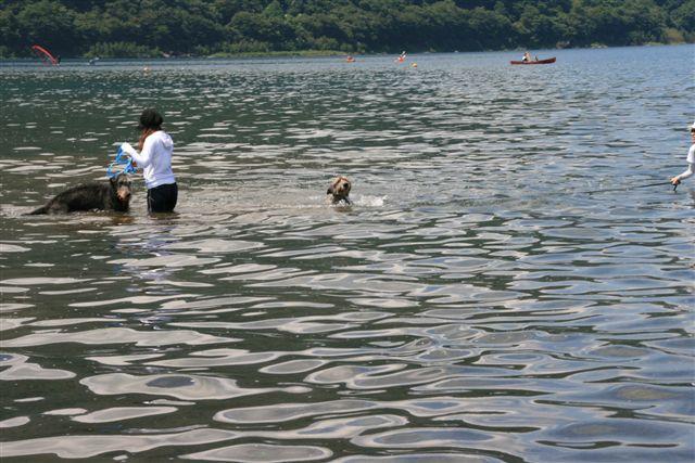 ぼく 泳いでるみたい・・