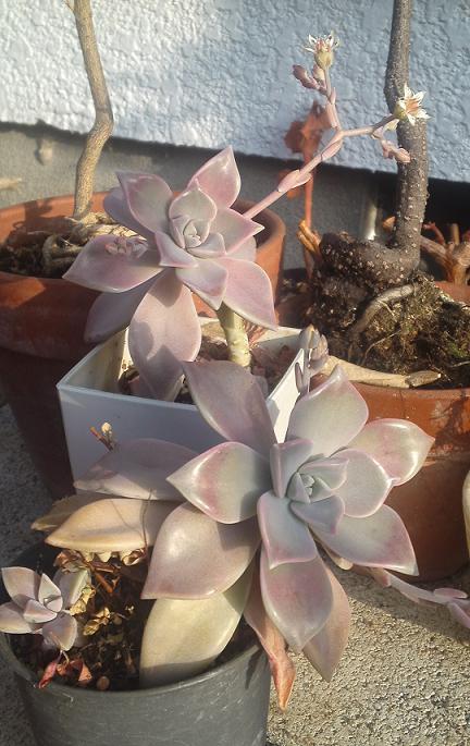 春うらら (2)