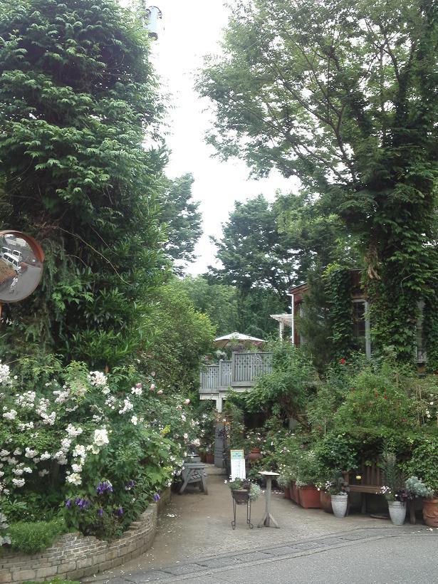 ミセスYOKOの庭 (96)