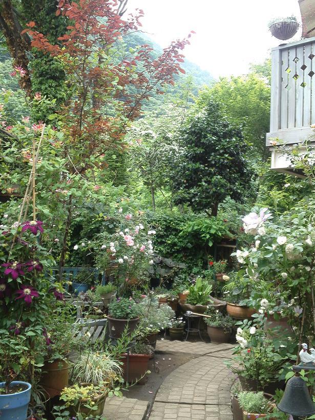 ミセスYOKOの庭 (88)