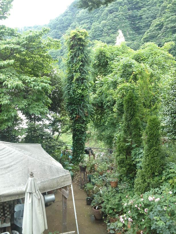 ミセスYOKOの庭 (74)