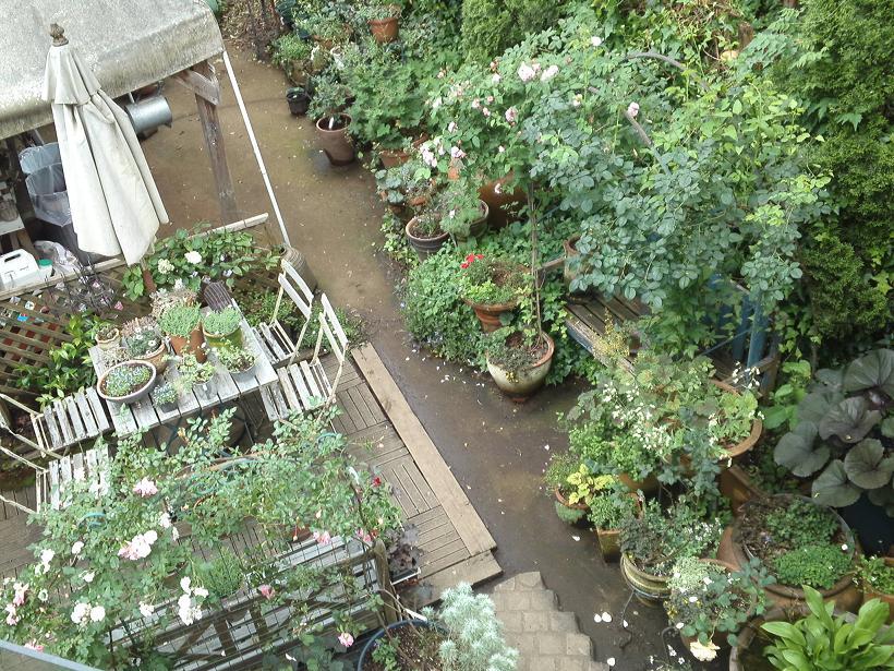 ミセスYOKOの庭 (75)