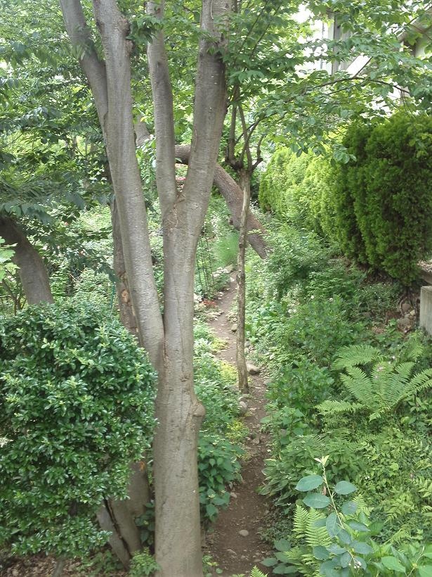 ミセスYOKOの庭 (78)