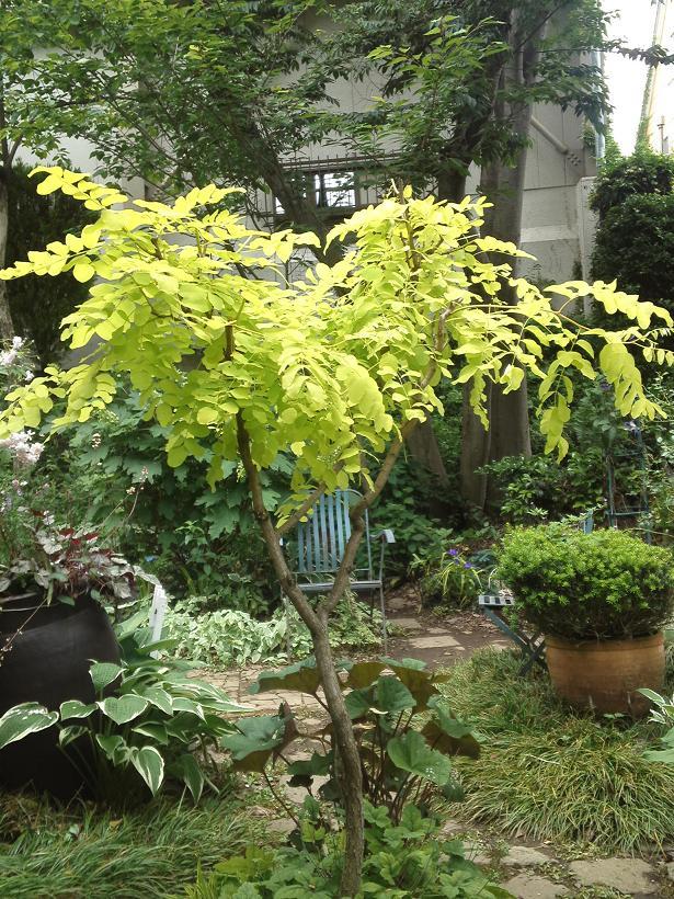 ミセスYOKOの庭 (68)