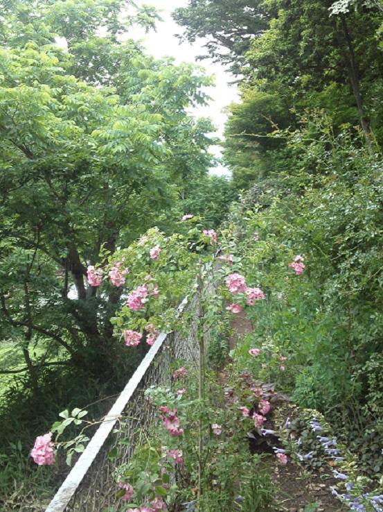 ミセスYOKOの庭 (71)