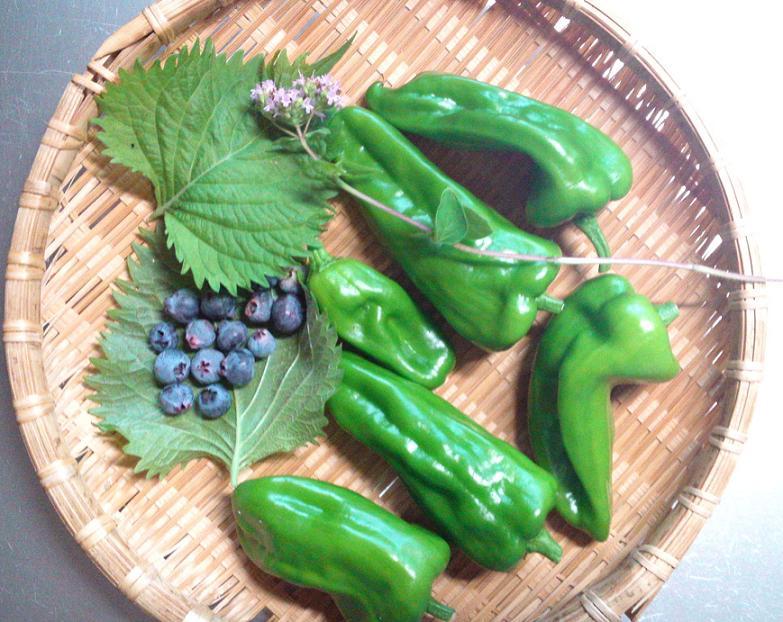 夏の野菜たち (8)