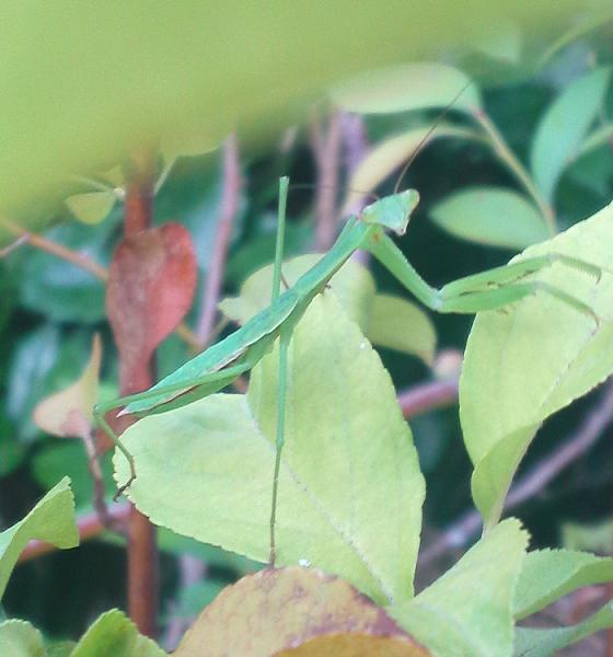 庭の虫たち