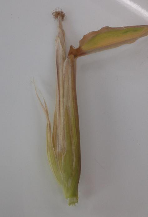 収穫 (4)