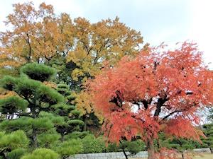 屋敷山公園2