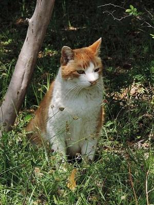 猫130427昭和記念公園 (2)S済