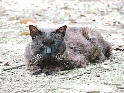 猫130708昭和記念公園 (7)S済