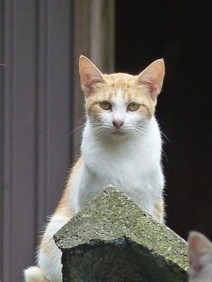 猫131007陣場藤野側 (16)