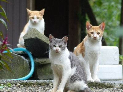 猫131007陣場藤野側 (22)