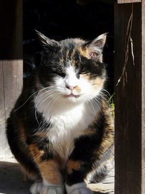 猫①130104昭和記念公園 (87)S済
