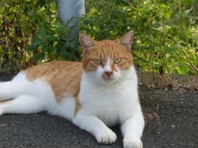 猫①130930多摩川関戸橋 (24)