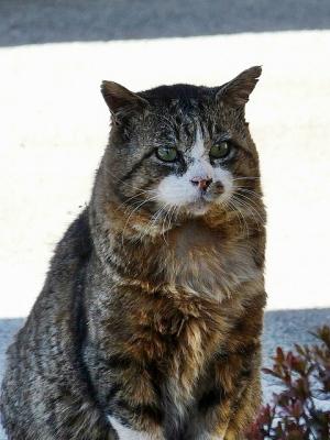 猫②130104昭和記念公園 (92)S済