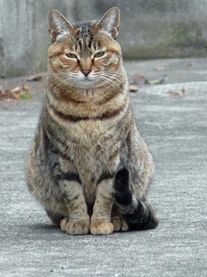 猫②130221小石川植物園 (254)S済