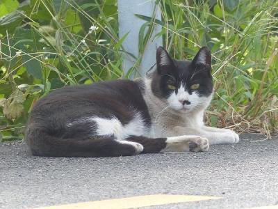 猫②130930多摩川関戸橋 (2)