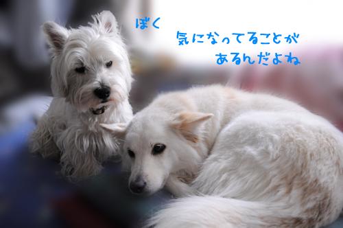 1_20100713235126.jpg