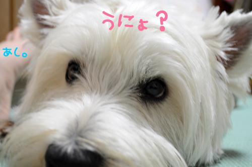 1_20100817222125.jpg