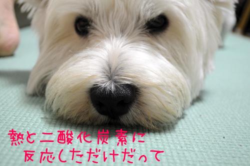 2_20100817222124.jpg