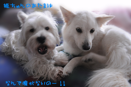 3_20100713235125.jpg