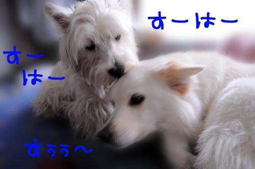 4_20100713235125.jpg