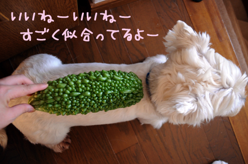 5_20101007230133.jpg