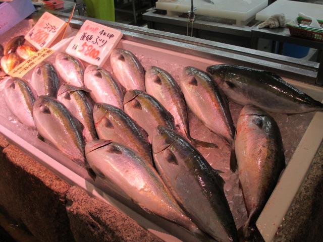 魚太郎-11