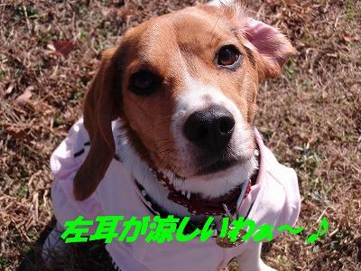 CIMG1659_sh01.jpg