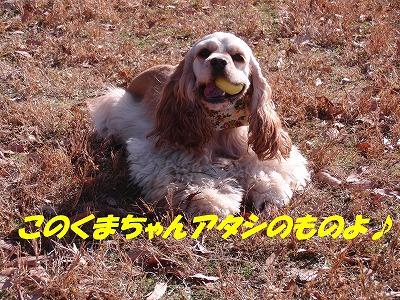 CIMG1688_sh01.jpg