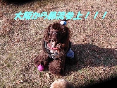 CIMG1717_sh01.jpg