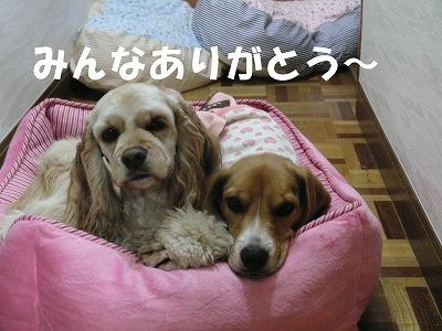 CIMG2909_sh01.jpg