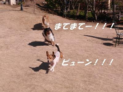 CIMG3206_sh01.jpg