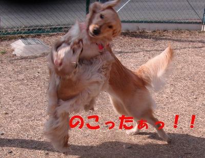 CIMG3329_sh01.jpg