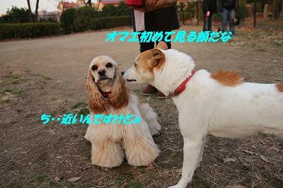 IMG_0520_sh01.jpg