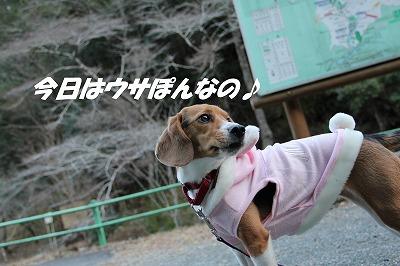 IMG_0933_sh01.jpg